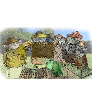 STAGE - Module 2 - Mon travail au rucher – 15 mai 2021 Apisaveurs