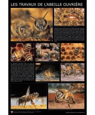 Affiche abeille ouvriere