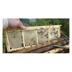 CADRE  SECTIONS pour miel  EN RAYON 80x130
